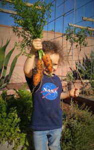 Adorable little boy proudly holding carrots he picked from the garden
